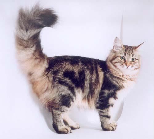 беспородные кошки фото