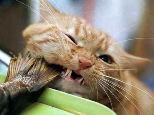 Смотреть фото кошек разных пород - b