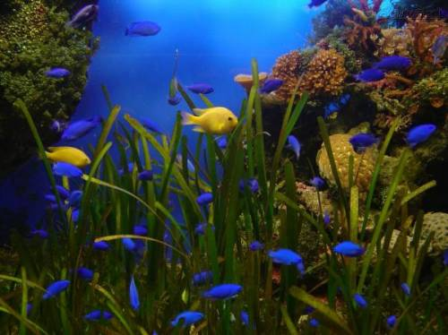 Подводный мир красноярского края