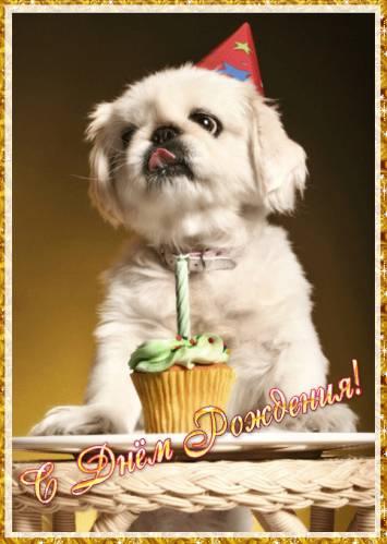 милые открытки с днем рождения