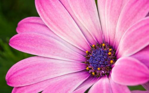 Картинки простого цветка карандашом