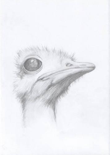Рисунки животных простым карандашом
